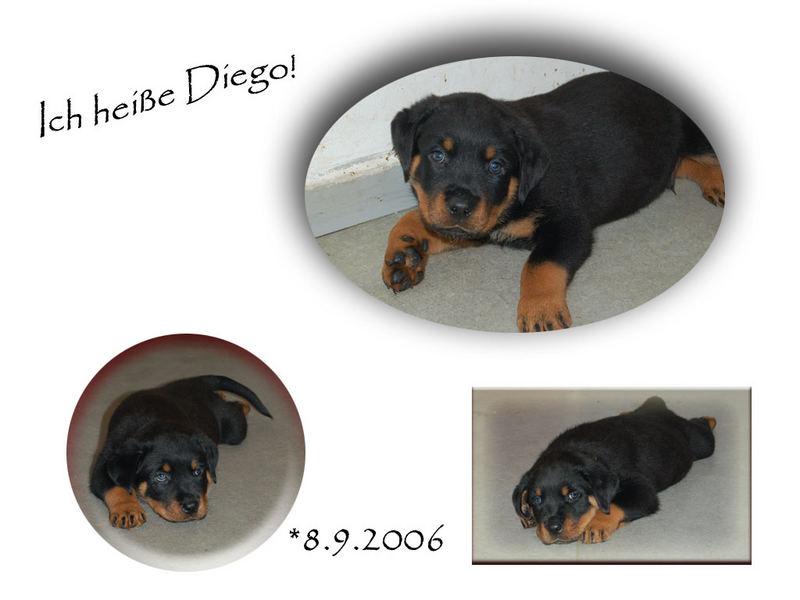 Mein Hund Diego