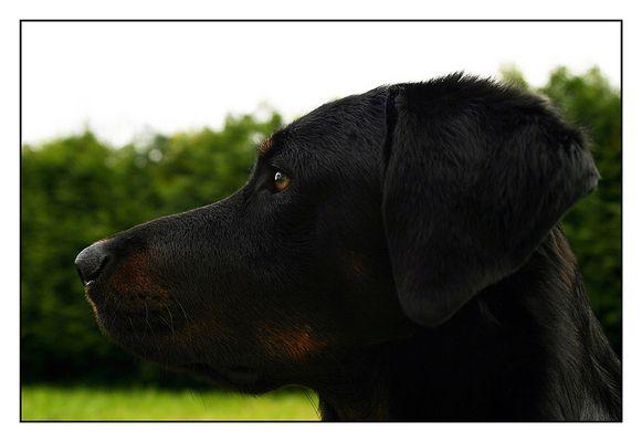 Mein Hund fixiert unsere Nachbarin