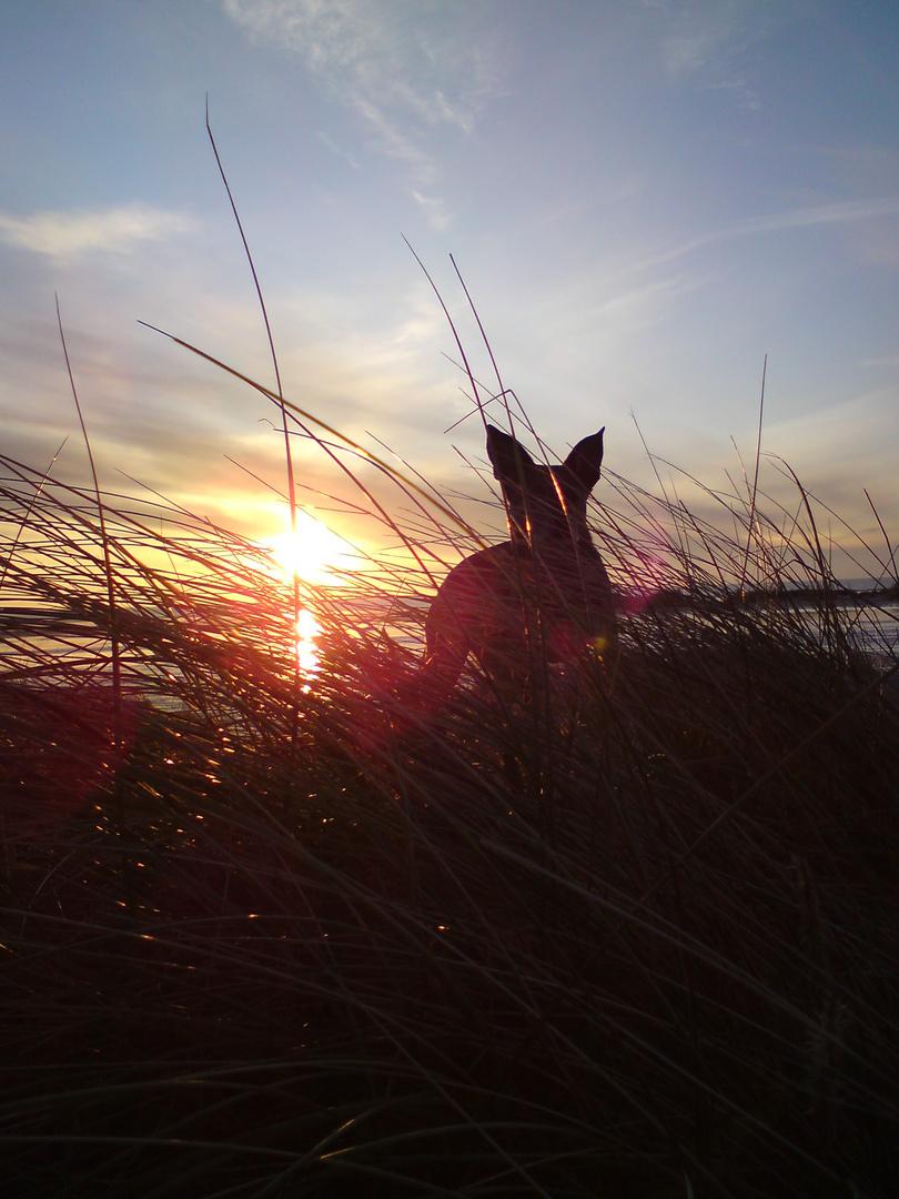 Mein Hund im Sonnenuntergang auf FANÖ