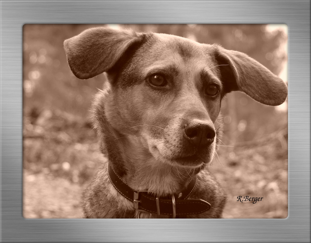 Mein Hund im Wald Bild2