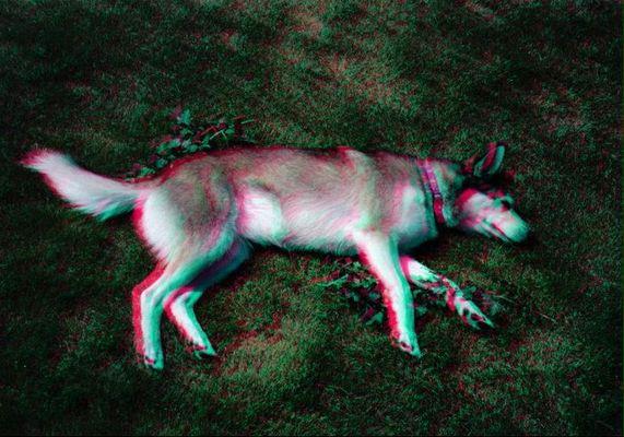 Mein Hund Kira (Das ist mei erstes 3D Bild)