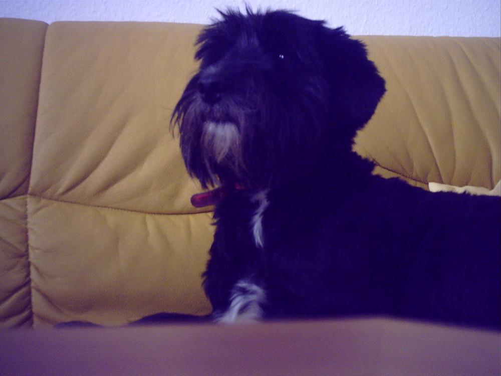 Mein Hund Klecks