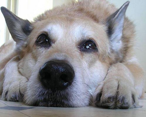 mein Hund Mobby!!