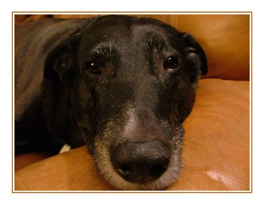 """Mein Hund """"Muffit"""""""