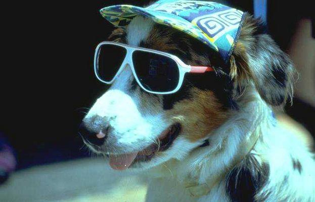 Mein Hund Ossi
