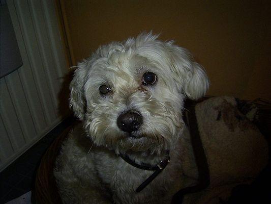 Mein Hund Sammy