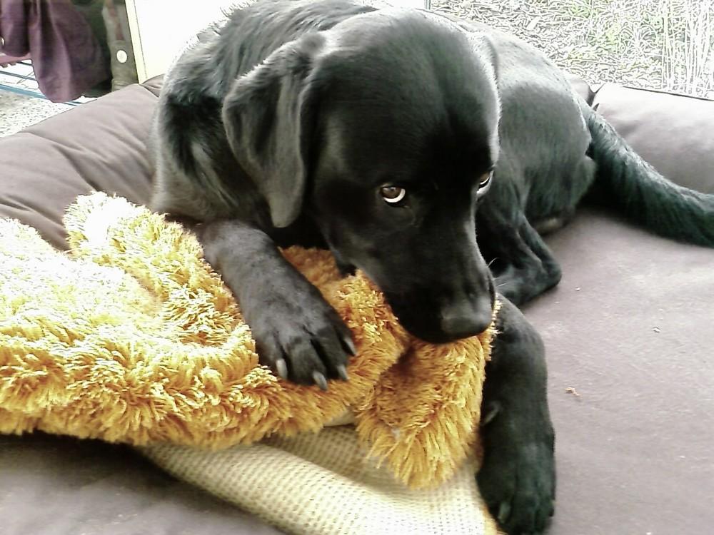 Mein Hund Snypi mit Schnuffeltuch