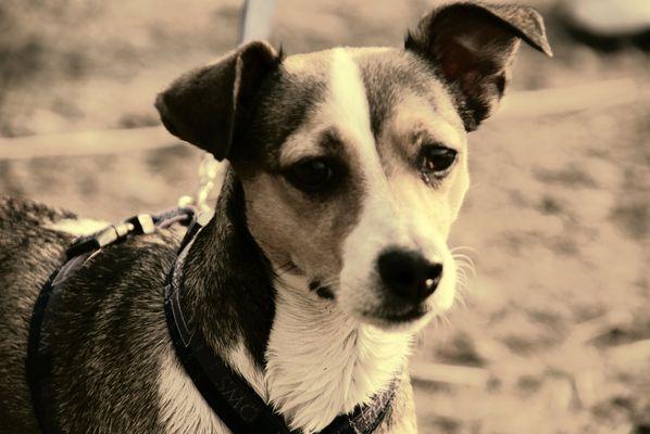 mein hund Sony