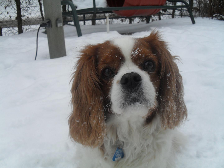 Mein Hund Sunny