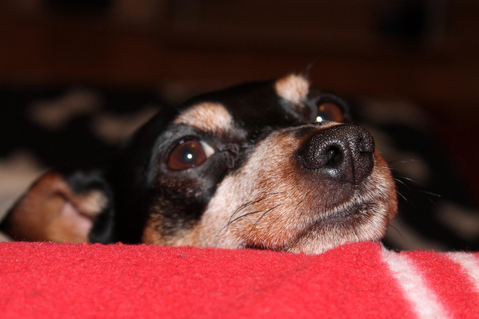 Mein Hund Tine