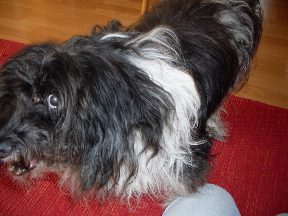 Mein Hundi Fiffi