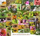 Mein Insektenjahr 2012