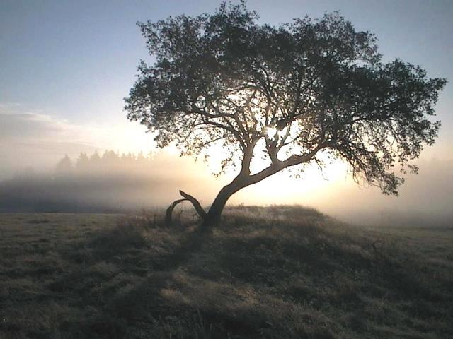mein Jahreszeitenbaum