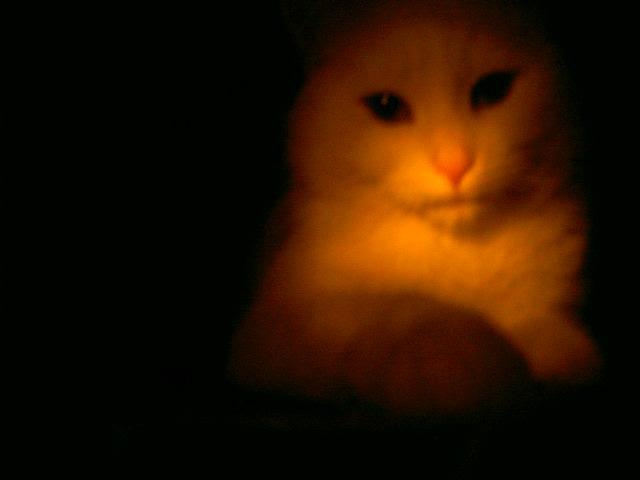 mein kätzchen