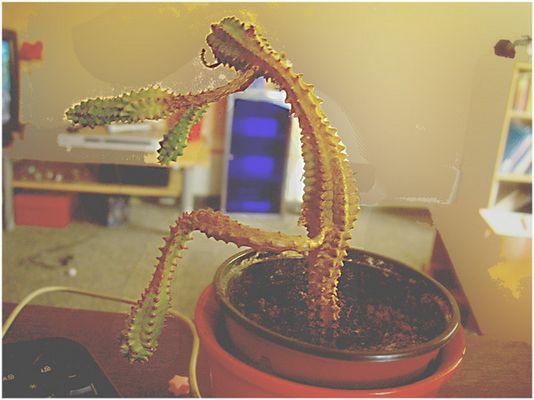 Mein Kaktus .