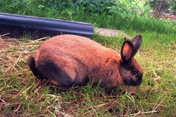 Mein Kaninchen Pünktchen..2