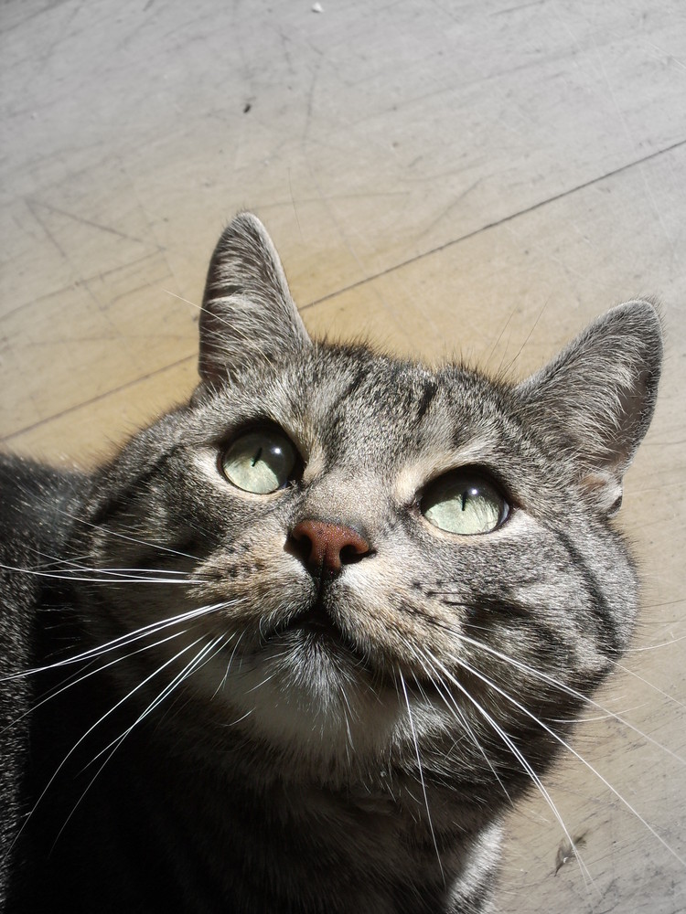 Mein Kater Henry