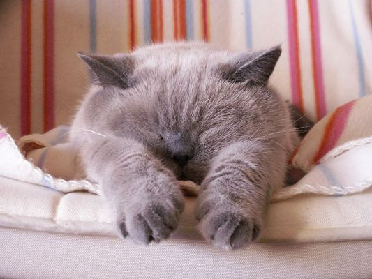 Mein Kater schläft....