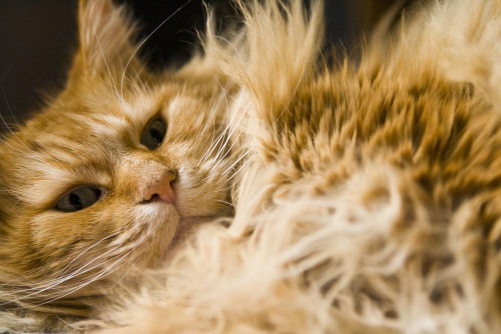 "Mein Katze ""Flinni"""