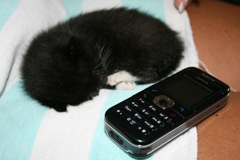 mein Katzenbaby 2