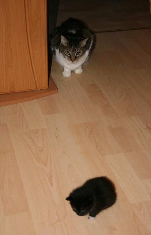 mein Katzenbaby 4