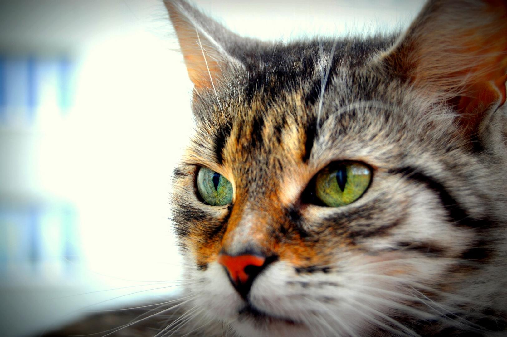 Mein Katzerl
