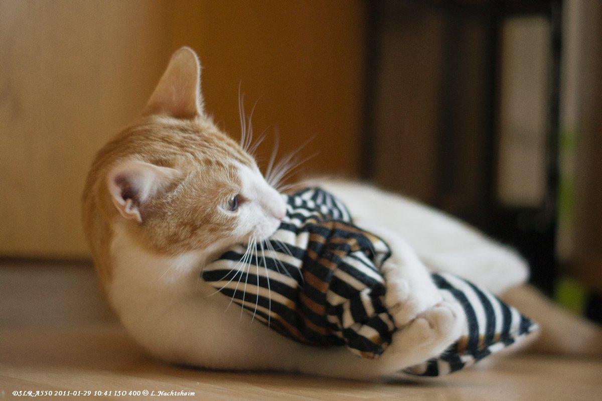Mein Kissen