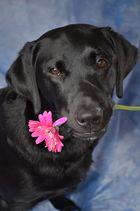 Mein kleiner Blumenkavalier.....