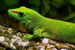 Mein kleiner grüner Gecko
