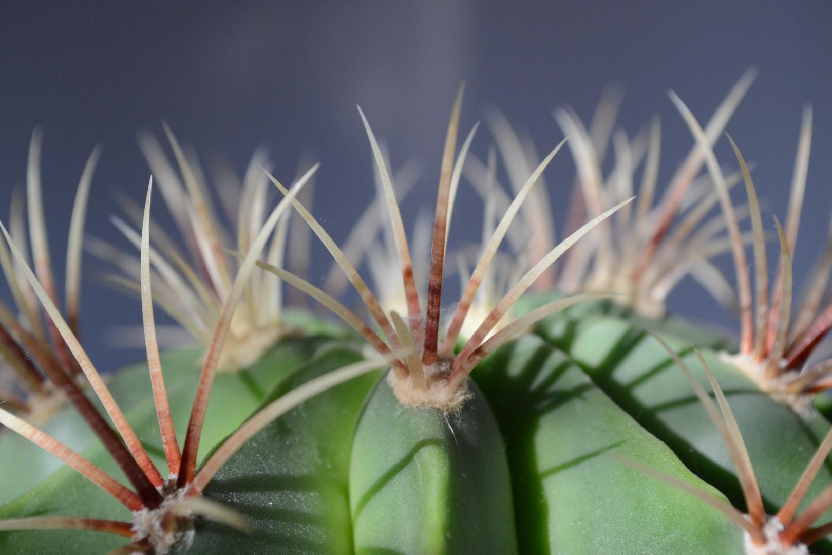 ....mein kleiner grüner Kaktus....