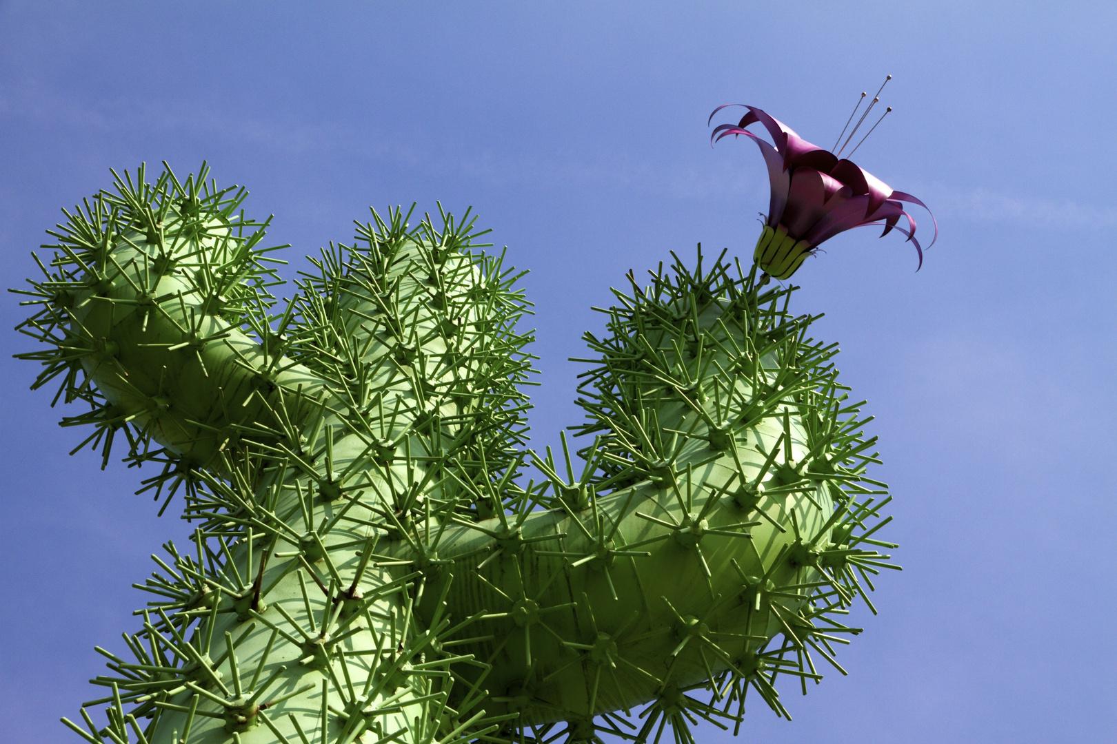 ..mein kleiner grüner Kaktus....