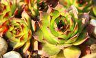 mein kleiner grüner Kaktus :)