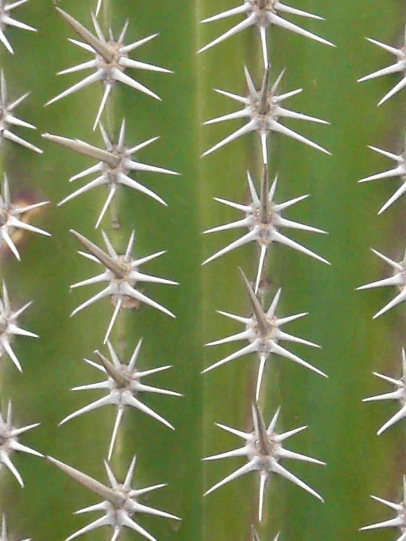 Mein kleiner, grüner Kaktus...
