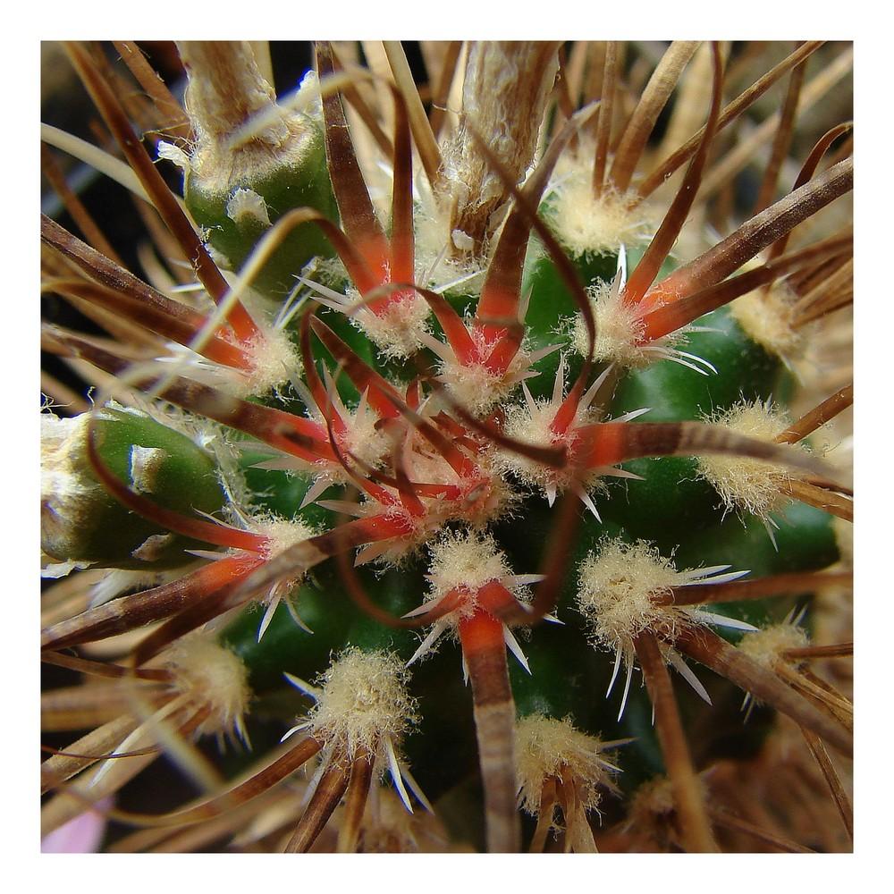 Mein kleiner grüner Kaktus