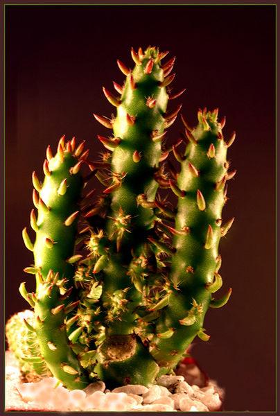 Mein kleiner grüner Kaktus......