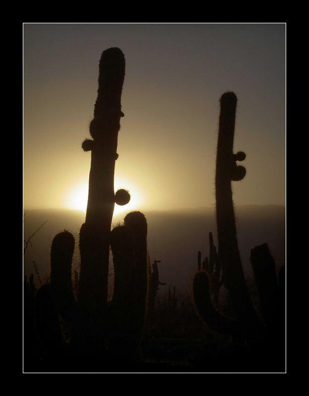 Mein kleiner grüner Kaktus sticht sticht sticht....