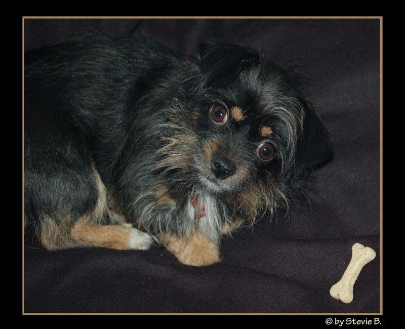 mein kleiner Hund Kruemel