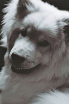 mein kleiner hunde-bär