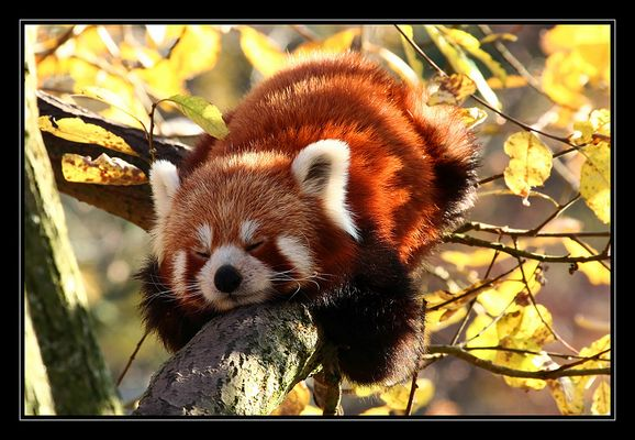 **Mein kleiner Panda**