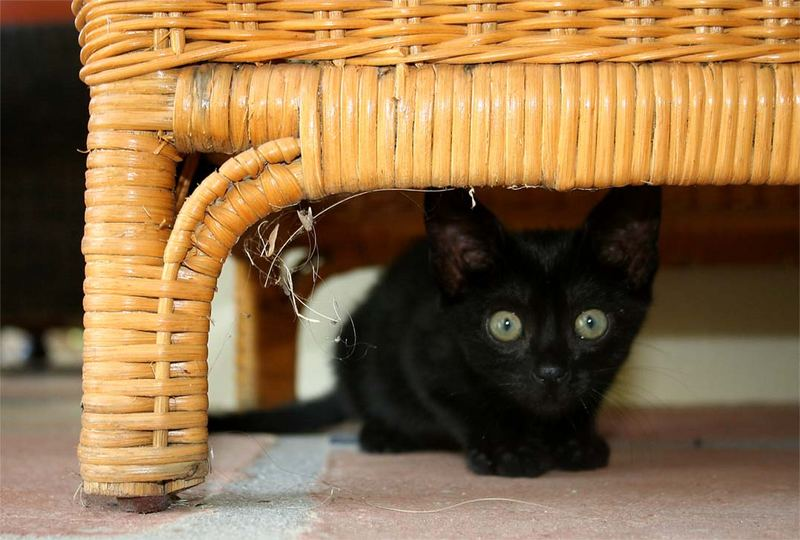 Mein kleiner schwarzer kater foto bild tiere for Kleiner schwarzer tisch