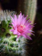 Mein kleiner süßer Kaktus