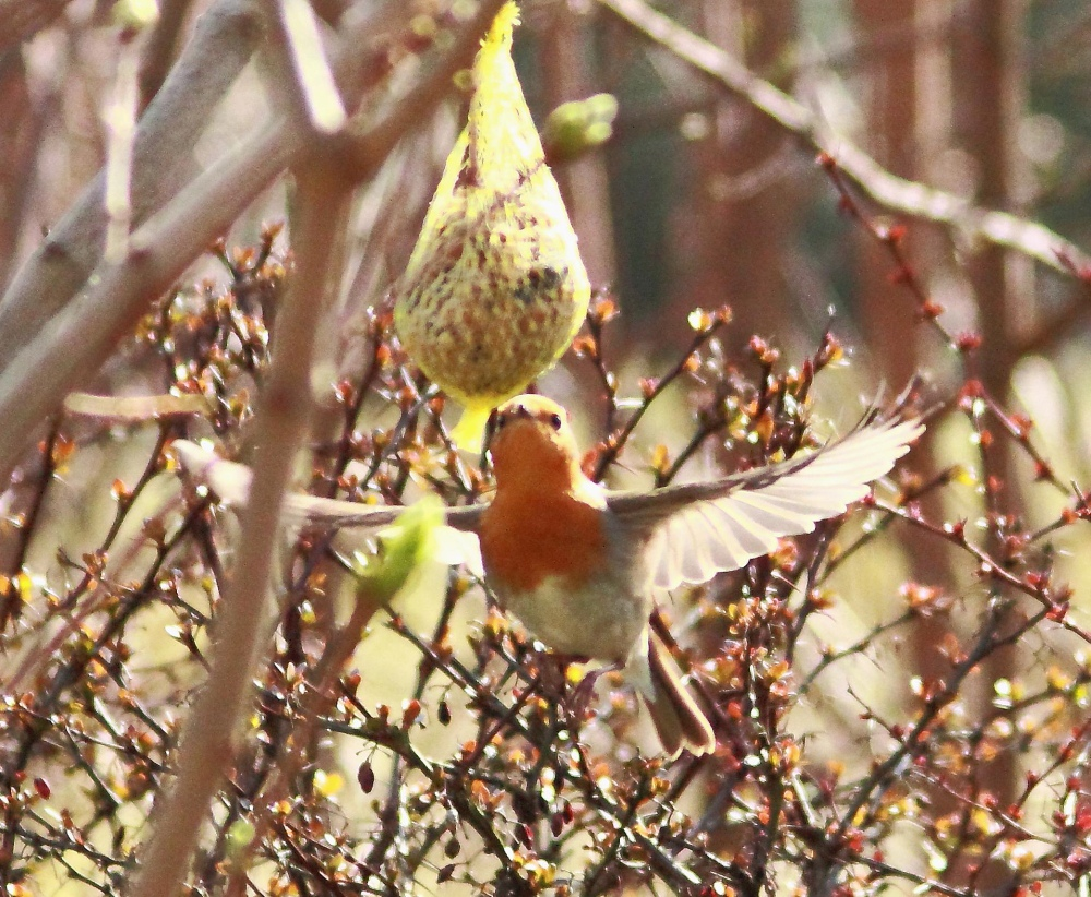 ...:)) mein Kolibri...