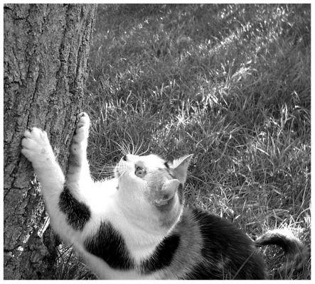 mein kratzbaum und ich