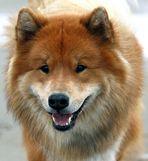 *mein lächelnder hund*