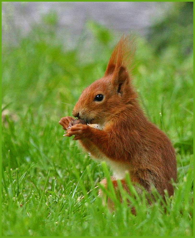"""Mein """"Lieblings-Eichhörnchen"""""""