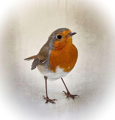 Mein Lieblings-Singvogel ...