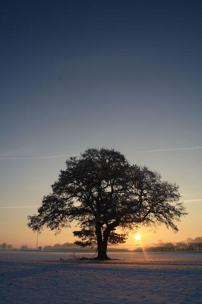mein Lieblingsbaum :)