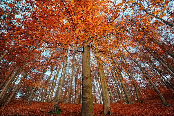 Mein Lieblingsbaum ...
