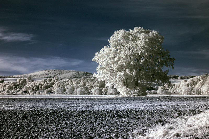 Mein Lieblingsbaum...