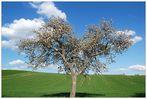 Mein Lieblingsbaum *Frühling 09